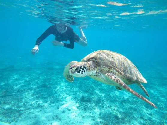 snorkel-with-sea-turtle