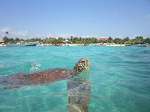 tulum-akumal-snorkel-with-turtles-private-tour-akumal